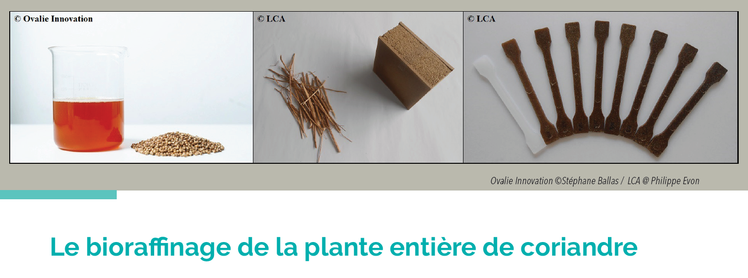 Le CATAR vous présente ses travaux sur le bioraffinage de la plante entière de coriandre